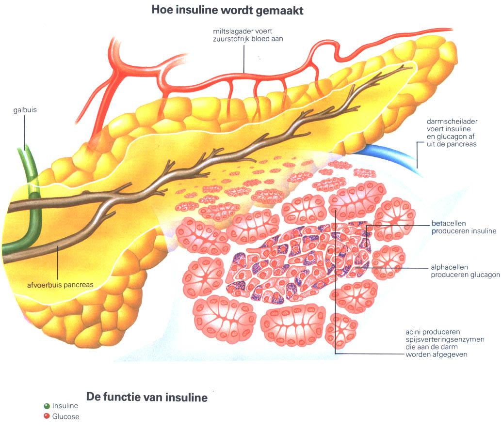 диета дюкана похудеть на 10 кг